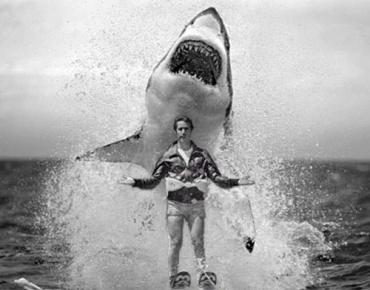 fonz shark